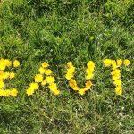 Einfach schöner: Die fünf schönsten Google-Fonts für Kosmetik-und Wellness-Salons